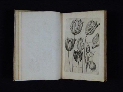 The title of this book is Florilegium Novum. It's content was created by the engraver Johann Theodor de Bry and was published in Oppenheim in 1612. It is an early example of what is known as a florilegium, a collection of floral images with little or no text.