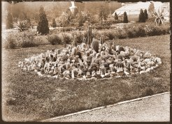 Cactus bed growing in the parterre of the Missouri Botanical Garden. The statue of Juno is in the background as well the 1868 Main Conservatory. The view is looking to the east and picture was taken in 1892.