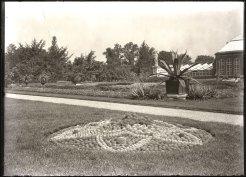 A pincushion garden at the Garden in July 1905