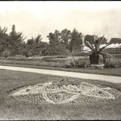 A pincushion garden at the Garden in July 1905