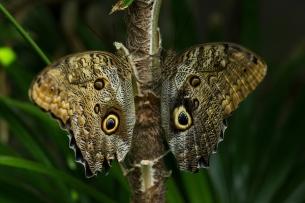 BH_Butterflies_001_Nieh