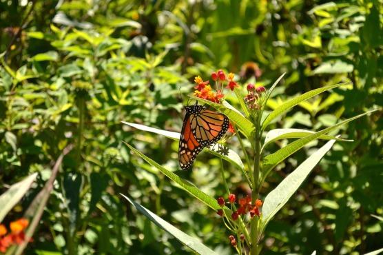 BH_Butterfly_SundosSchneider_08