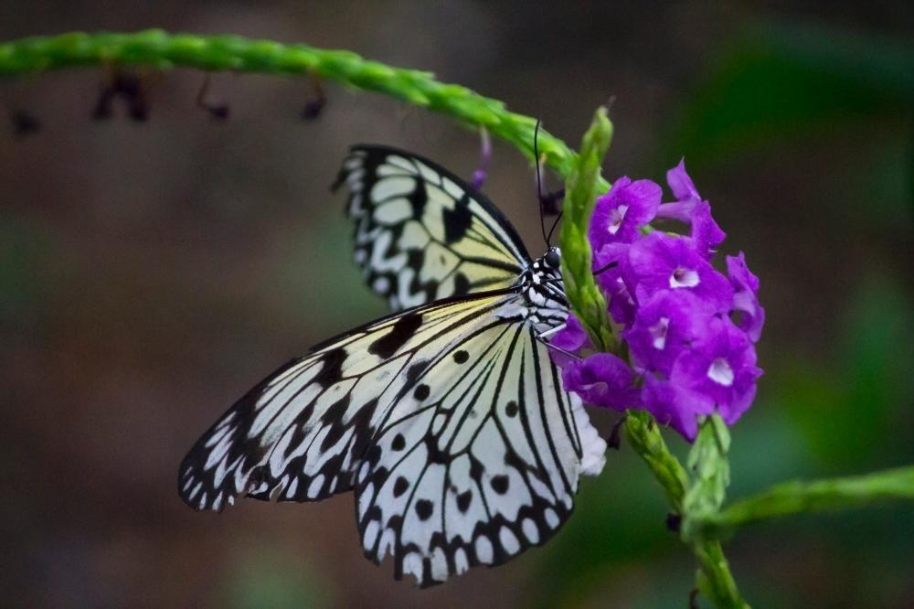 ButterflyHouse_03_Suzann