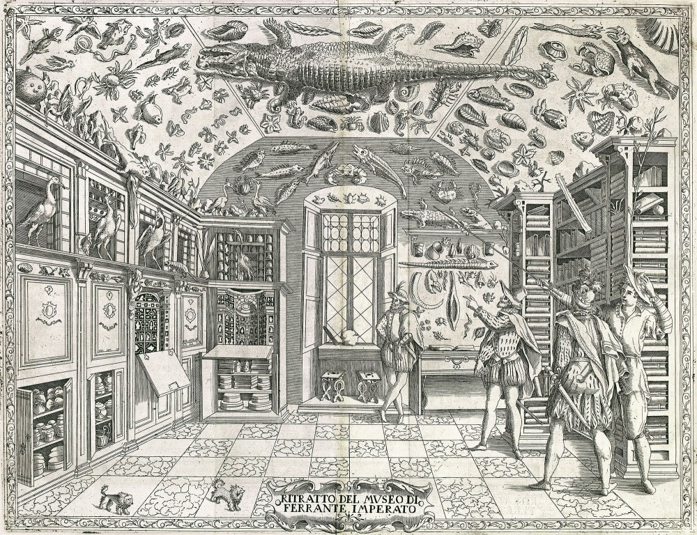 Illustration of natural history cabinet