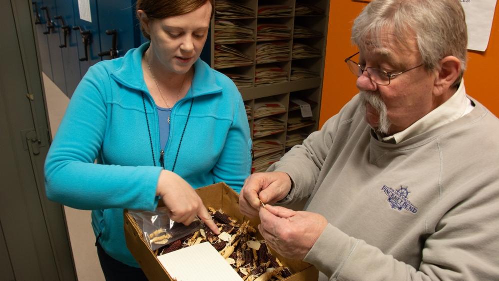 Zea Mays Herbarium Specimens_Cassidy Moody