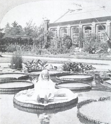 A young child sits on a Victoria leaf in the 1890s.