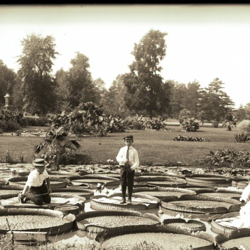 Children posing on Victoria leafs in the lily pond at Tower Grove Park in 1906.