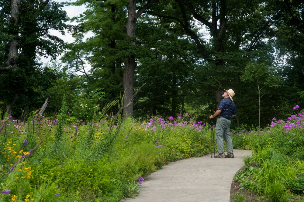 Stroll the Whitmire Wildflower Garden