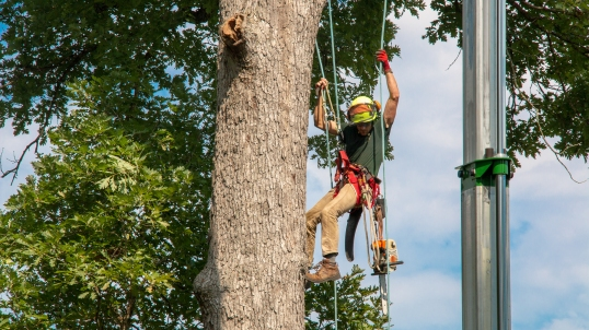 Travis Hall of the Missouri Botanical Garden climbs a tree at Jefferson Barracks National Cemetery.