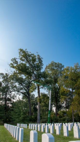 Ben Chu of the Missouri Botanical Garden uses a lift to cut dead limbs out of an oak tree at Jefferson Barracks National Cemetery.