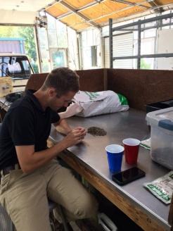 Garden horticulturist Adam Steffensmeier extracting seeds of Karomia gigas.