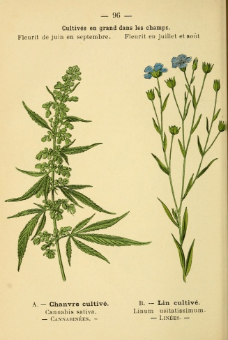 From Atlas de poche des plantes des champs, des prairies et des bois (1894). Digitized by the MBLWHOI Library for Biodiversity Heritage Library. The Garden also owns a copy of this work.