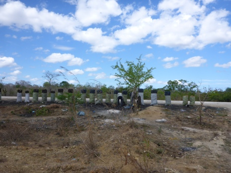 A charcoal production site near a population of Karomia gigas. Photo by Andrew Wyatt.
