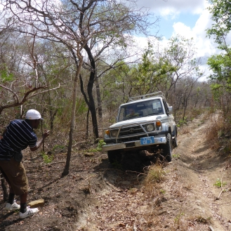 Reaching the tree populations was not easy. The field team's vehicles got stuck at least 4 times trying to navigate down dirt paths.