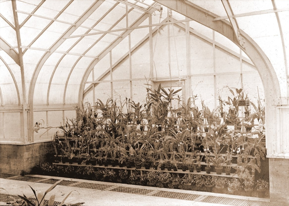 Orchids in Greenhouse 1916